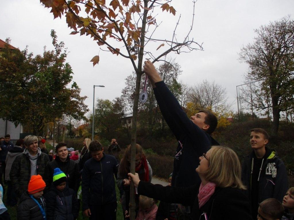 sazeni stromu 26