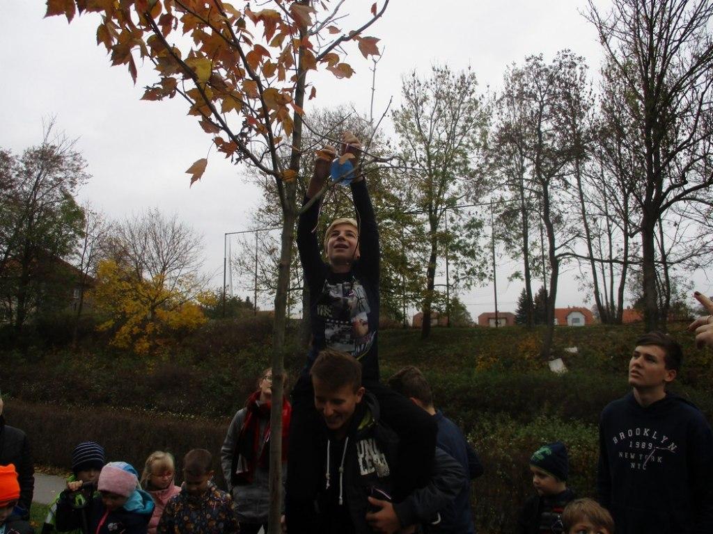 sazeni stromu 29