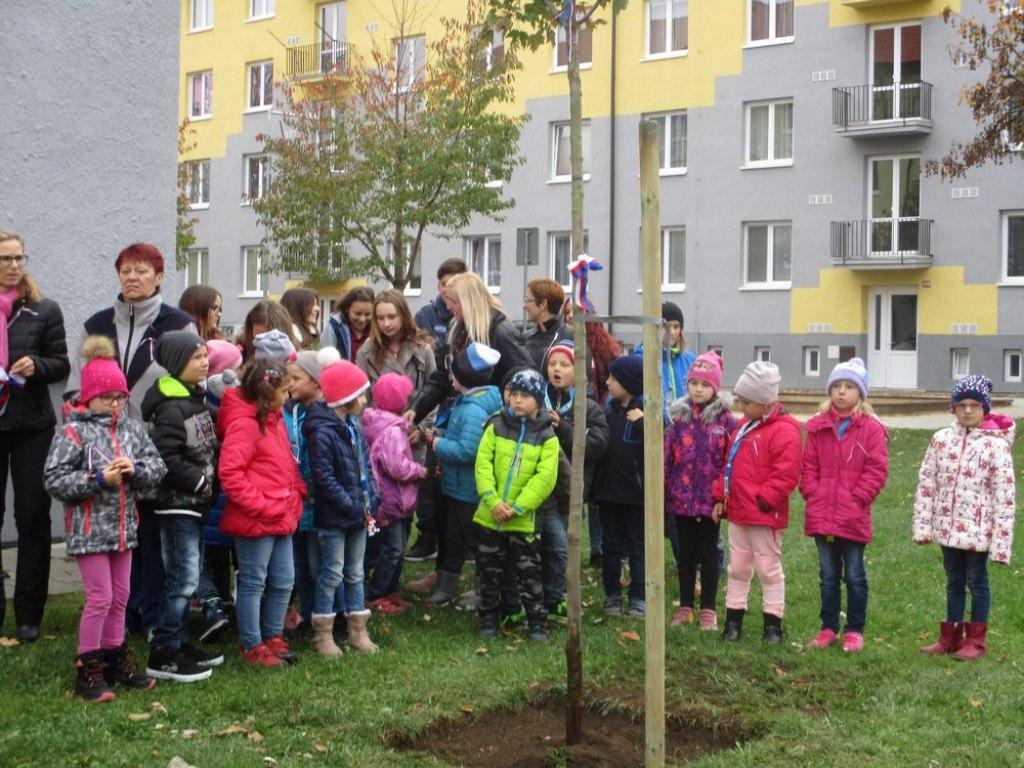 sazeni stromu 39
