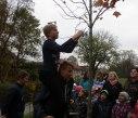 sazeni stromu 28