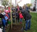 sazeni stromu 30