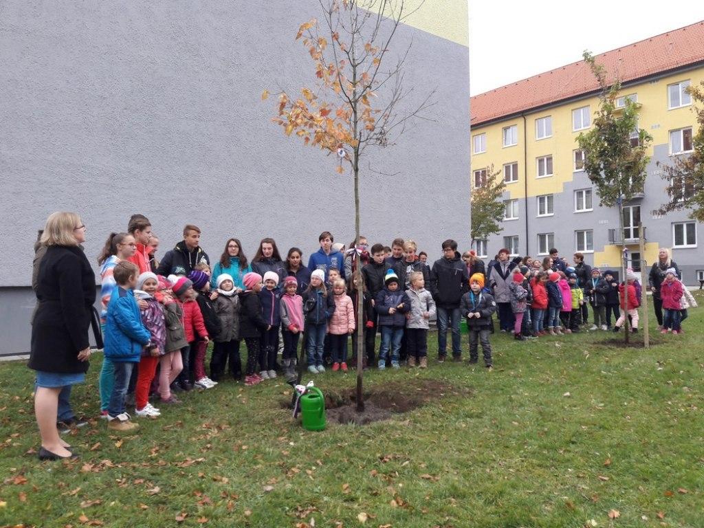 sazeni stromu 2 4