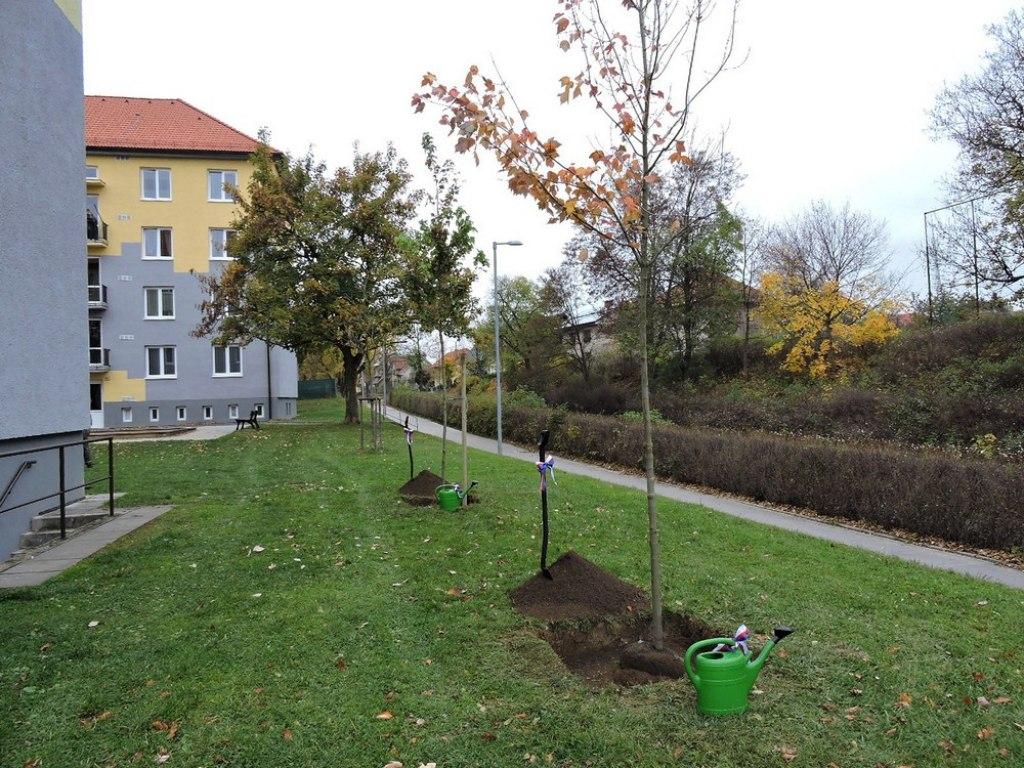 sazeni stromu 2 5