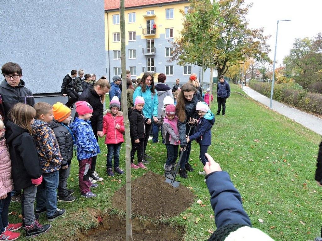 sazeni stromu 2 11