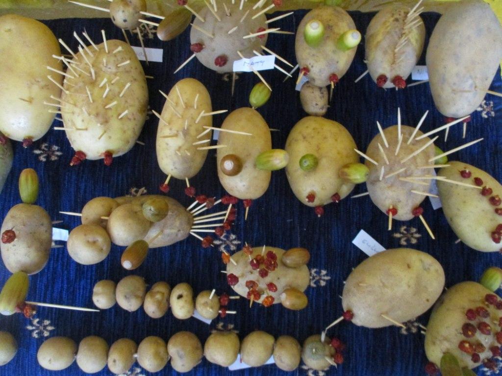 bramborový den 12